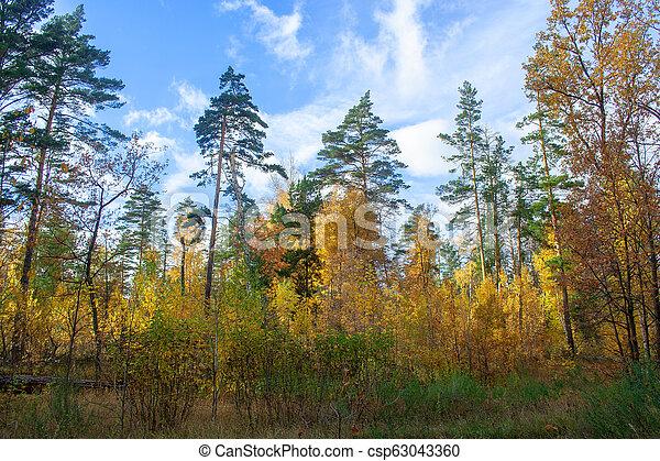 Golden autumn forest - csp63043360