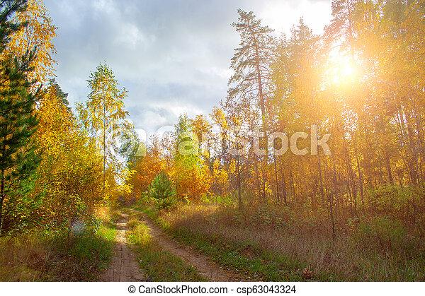 Golden autumn forest - csp63043324