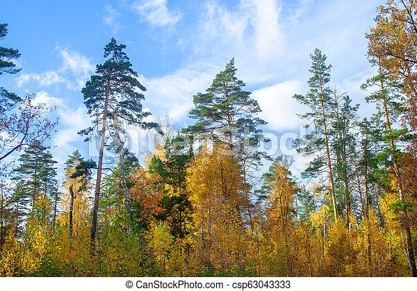 Golden autumn forest - csp63043333