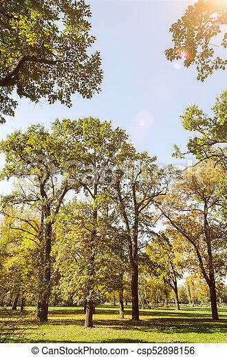 golden autumn in a park - csp52898156