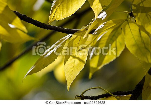 Golden Autumn Leaves - csp22694628