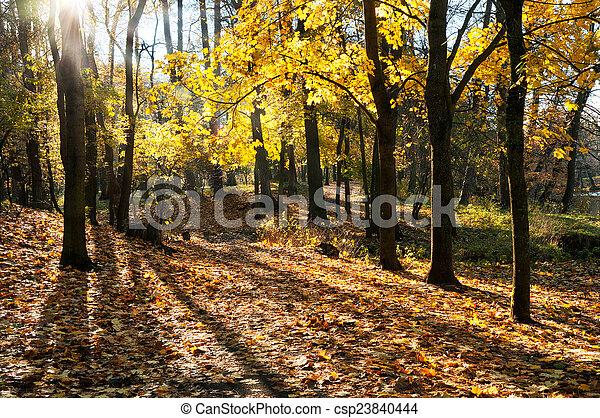 Golden autumn - csp23840444