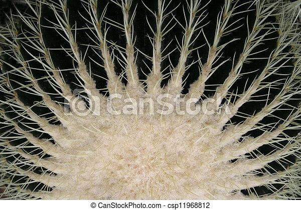 Golden Barrel Cactus #3 - csp11968812