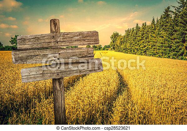 Golden crop field scenery - csp28523621