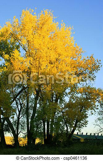 Golden Foliage - csp0461136