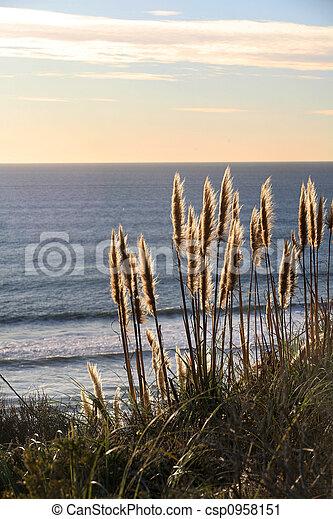 Golden grass - csp0958151