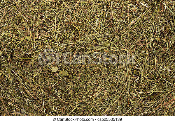 Golden hay texture background close-up - csp25535139
