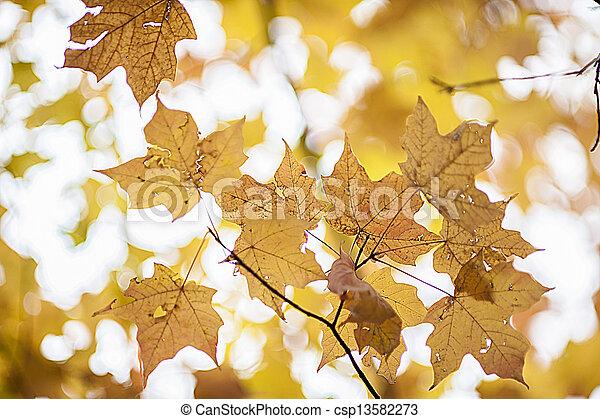 Golden Leaves of Autumn - csp13582273