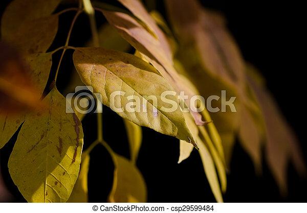Golden Leaves of Autumn - csp29599484