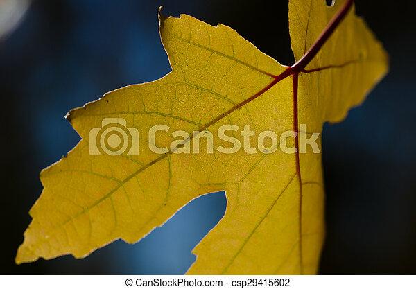 Golden Leaves of Autumn - csp29415602
