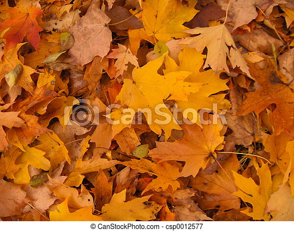 Golden Leaves - csp0012577