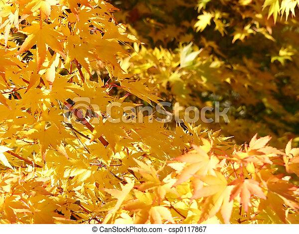 golden leaves - csp0117867