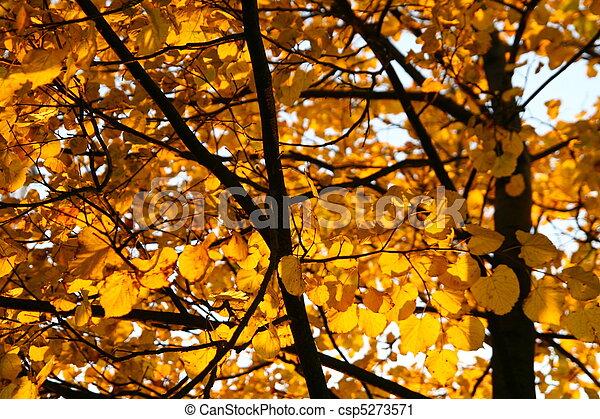 golden leaves - csp5273571