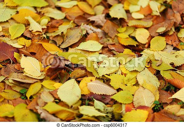 golden leaves - csp6004317