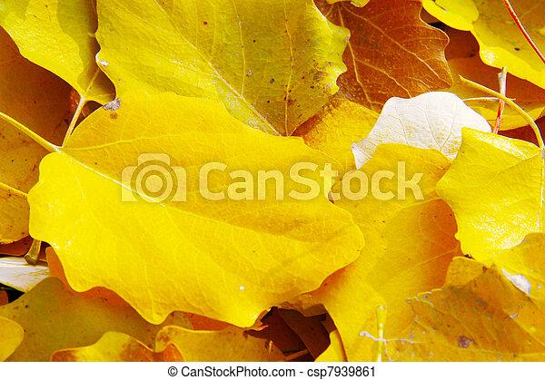 Golden leaves - csp7939861