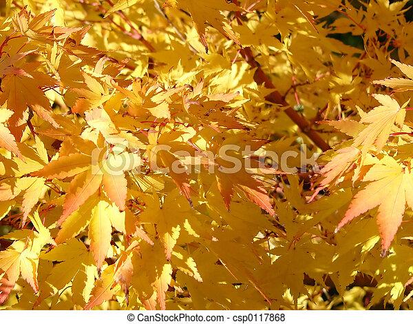 golden leaves - csp0117868