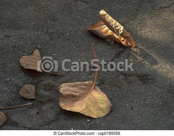 Golden leaves - csp0189356