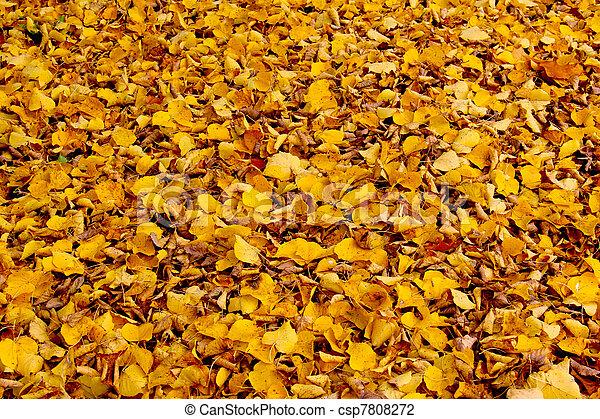 Golden leaves - csp7808272