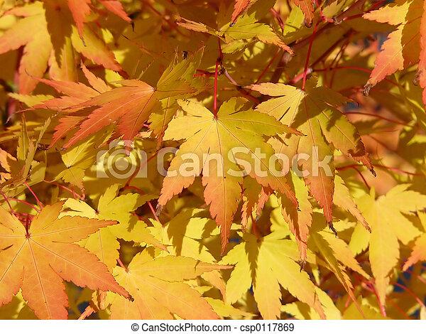 golden leaves - csp0117869