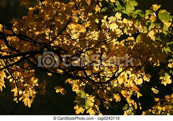 Golden leaves - csp0243119