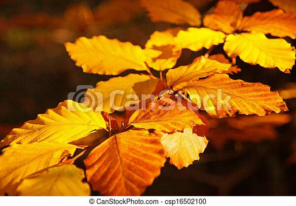 golden leaves - csp16502100