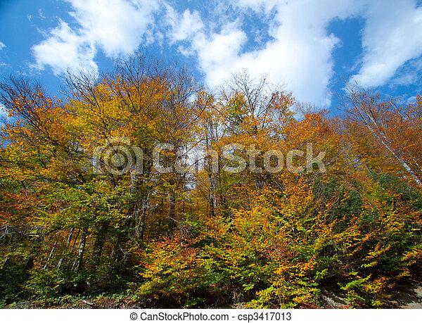 Golden leaves - csp3417013