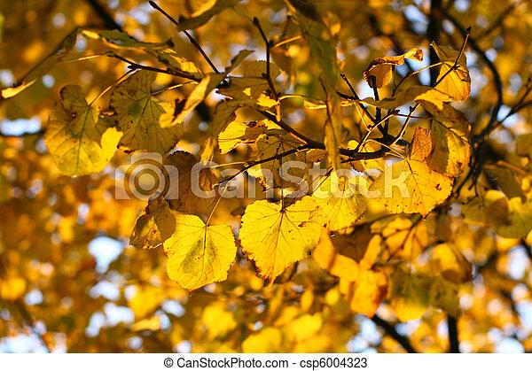 golden leaves - csp6004323