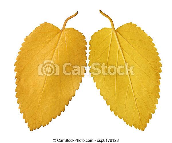golden leaves - csp6178123