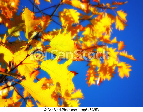 Golden leaves - csp8480253