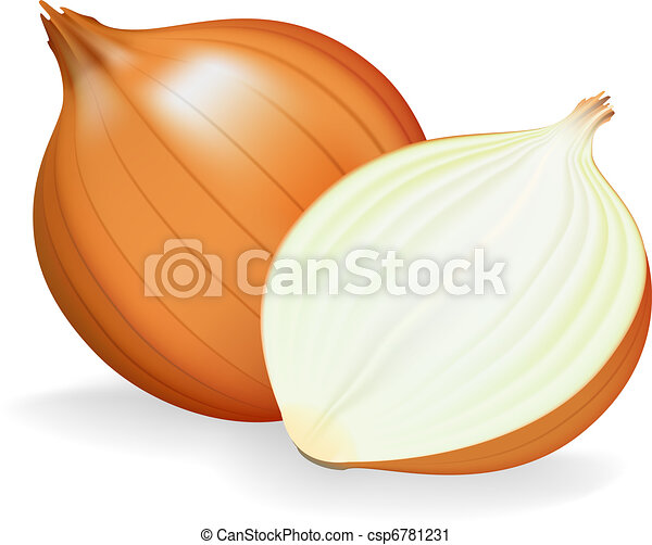 Golden onion whole and half. Vector illustration. - csp6781231
