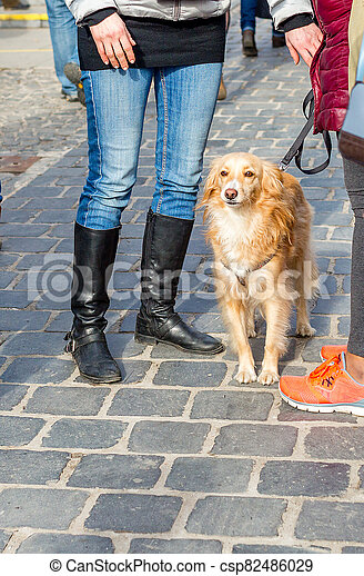 Golden Retriever dog on a leash with owner on the street. Space for text - csp82486029