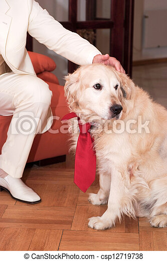 Golden retriever - csp12719738