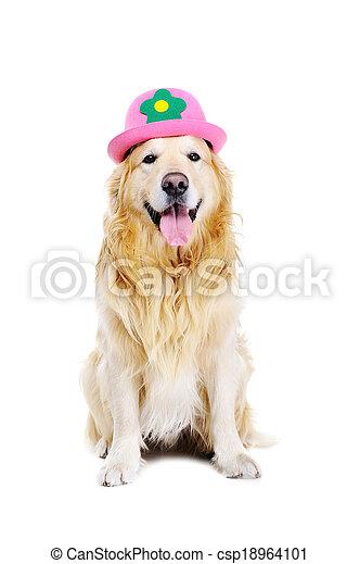 Golden Retriever Wearing Funny Hat