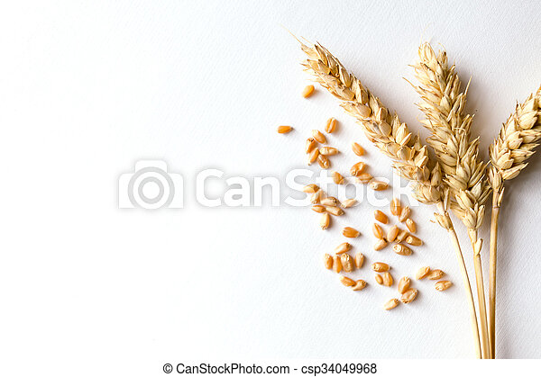 Golden ripe wheat on white background - csp34049968