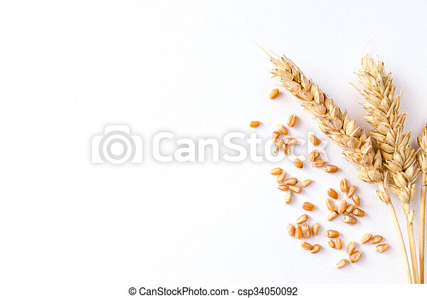 Golden ripe wheat on white background - csp34050092