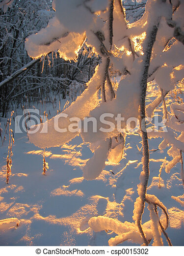 Golden Snow - csp0015302