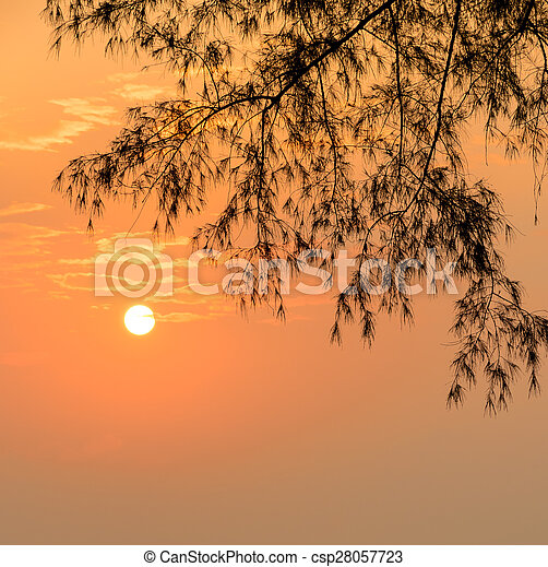Golden sunrise with silhouette pine leaf - csp28057723
