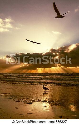 Golden sunset colors - csp1586327