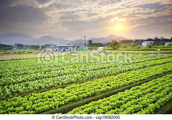 Golden sunset over farm field - csp18082005
