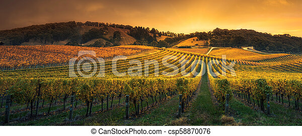 Golden Sunset Vines - csp58870076