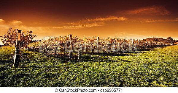 Golden Vineyard Sunset - csp6365771