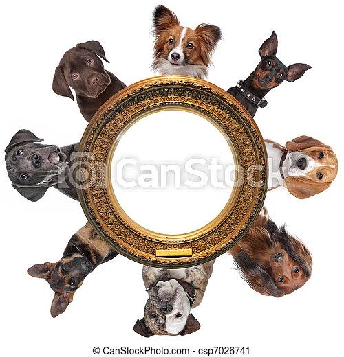 goldenes, gruppe, ungefähr, bild, porträts, rahmen, hund, runder  - csp7026741