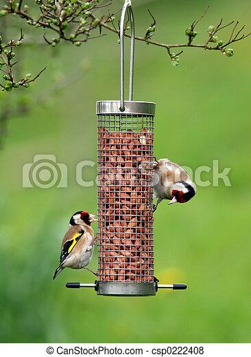 Goldfinches Feeding - csp0222408