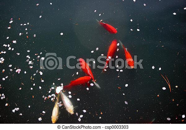 goldfish 4378 - csp0003303
