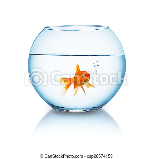 goldfish breathes in a fishbowl - csp26574153