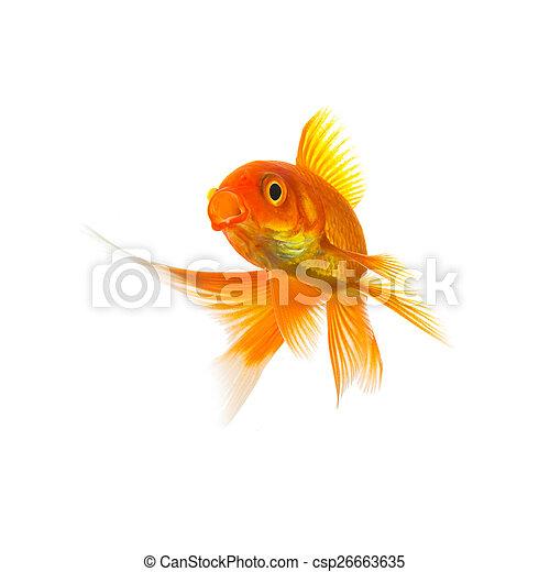 Goldfish Carassius auratus on white - csp26663635