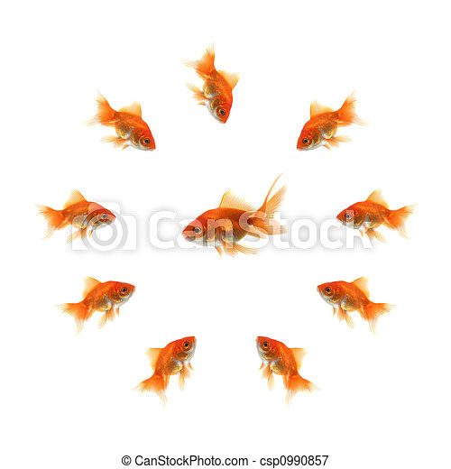 Goldfish in a circle and a ugly fish in the middle - csp0990857