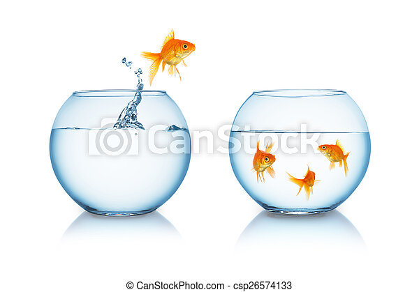 goldfish in fishbowl jumps to friends - csp26574133