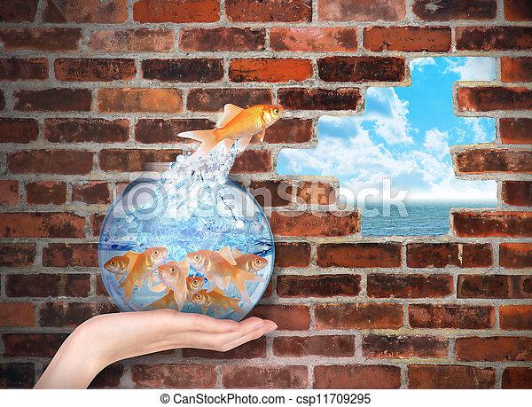 goldfish, liberdade, pular, oportunidade - csp11709295
