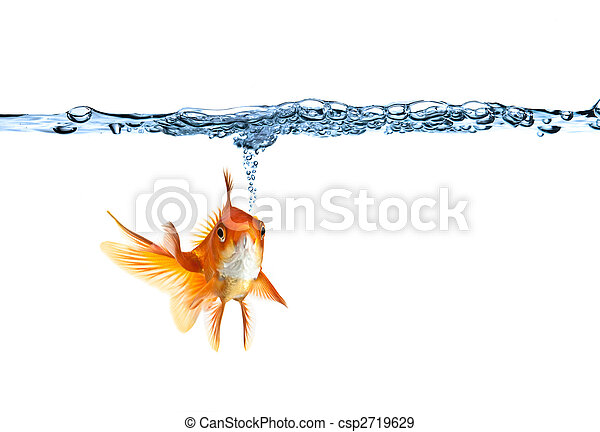 goldfish making air bubbles - csp2719629